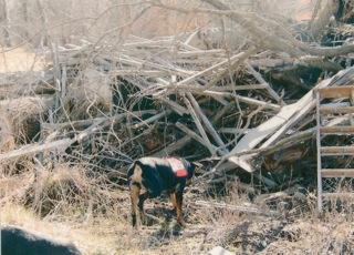 K9 Search Dog