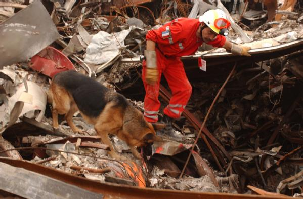 Urban Search and Rescue K9