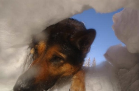 Avalanche K9 Search and Rescue