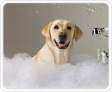 puppy bath grooming