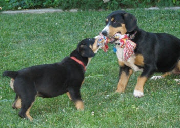 tug a war puppy games