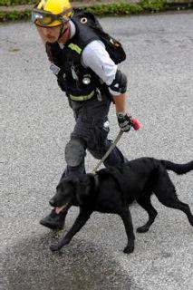 FEMA Search and Rescue Dog