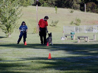 K9 Training Search and Rescue